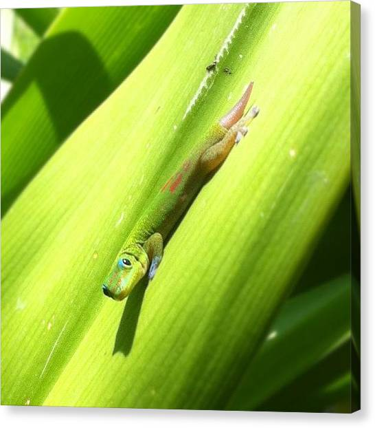 Lizards Canvas Print - Someone Stole My Tail! #lizard #gecko by Brian Governale