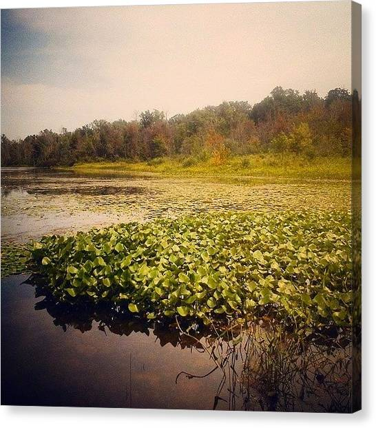 Wetlands Canvas Print - Something Something Lake  by Milk R