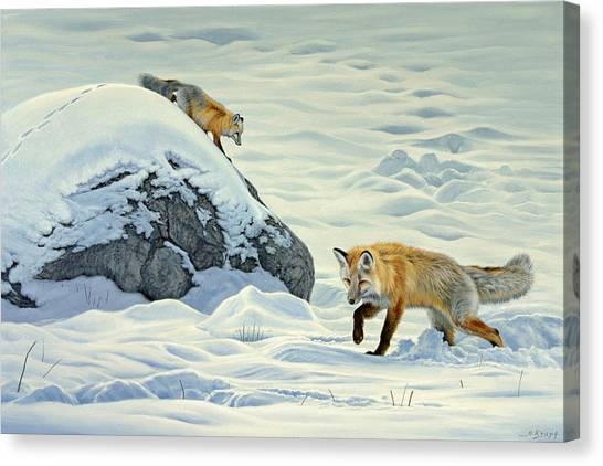 Yellowstone Canvas Print - Something Under The Snow by Paul Krapf