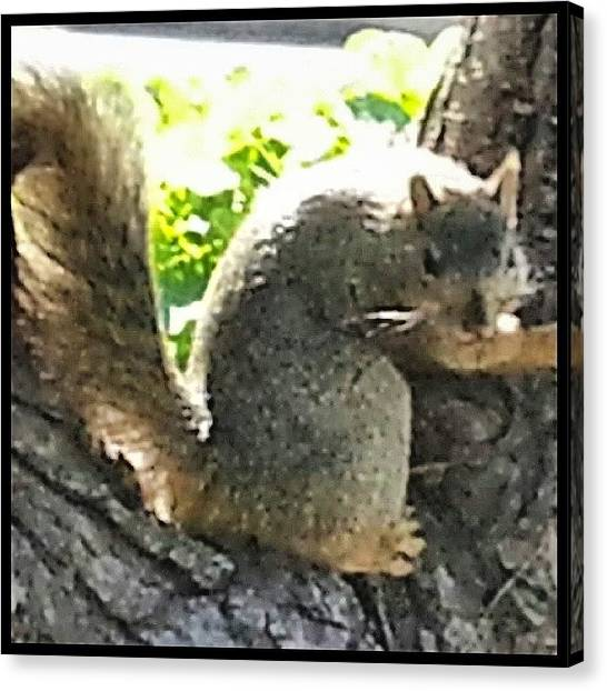 Squirrels Canvas Print - Sometimes I Get The Feeling I'm Being by Kevin Previtali