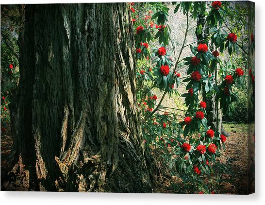 Uc Berkeley Canvas Print - Sometimes Life Is Sweet by Laurie Search