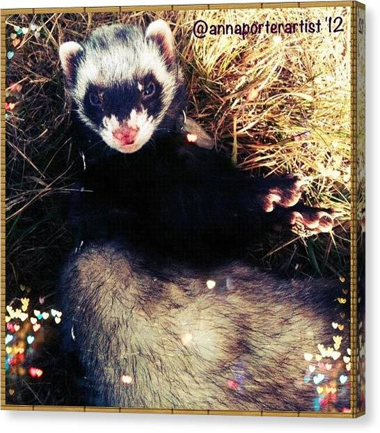 Apples Canvas Print - Sometimes We Like To Roll In The Straw #ferrets #pets by Anna Porter
