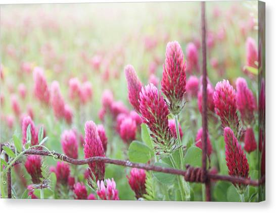 Clover Canvas Print - Somewhere Only We Know by Amy Tyler