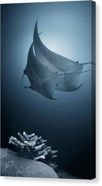 Coral Reefs Canvas Print - Sonata by Andrey Narchuk