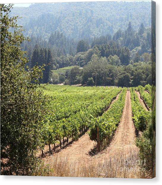 Sonoma Vineyards In The Sonoma California Wine Country 5d24515 Square Canvas Print by Wingsdomain Art and Photography