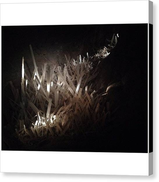 Sonoran Desert Canvas Print - Sonoran Desert Museum by Alyson Von