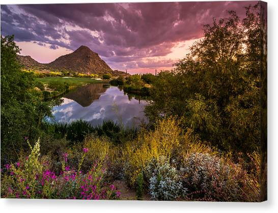 Golf Course Canvas Print - Sonoran Desert Spring Bloom Sunset  by Scott McGuire