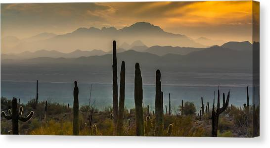 Sonoran Desert Sunset Canvas Print