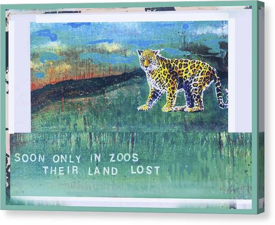 Soon Only In Zoos  Their Land Lost Canvas Print by Mary Ann  Leitch