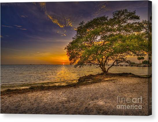 Mangrove Trees Canvas Print - Soothing Light by Marvin Spates