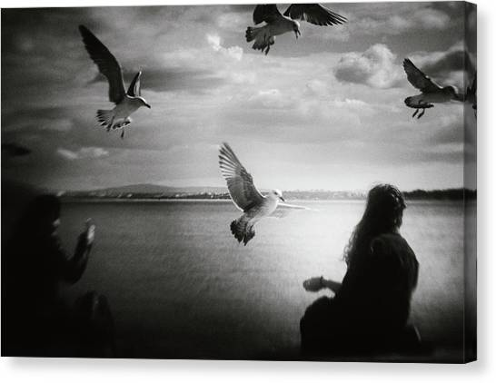 Seagulls Canvas Print - Soul Call by Laura Mexia