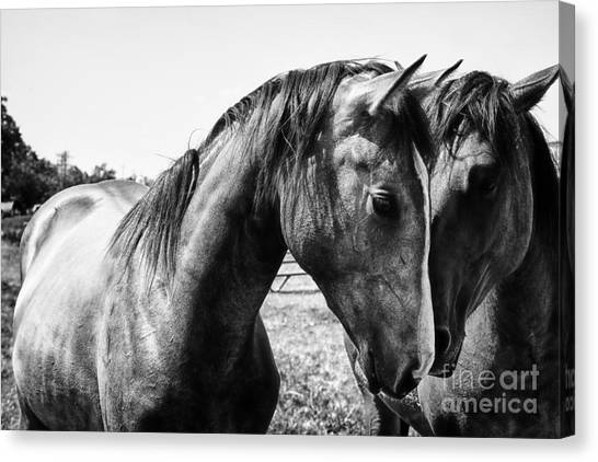 White Horse Canvas Print - Soul Mates by Toni Hopper