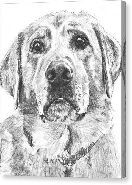 Soulful Lab Face Canvas Print