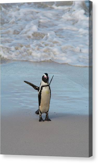 South Africa, Cape Town, Simon's Town Canvas Print by Cindy Miller Hopkins