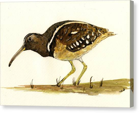 South American Canvas Print - South American Painted Snipe by Juan  Bosco