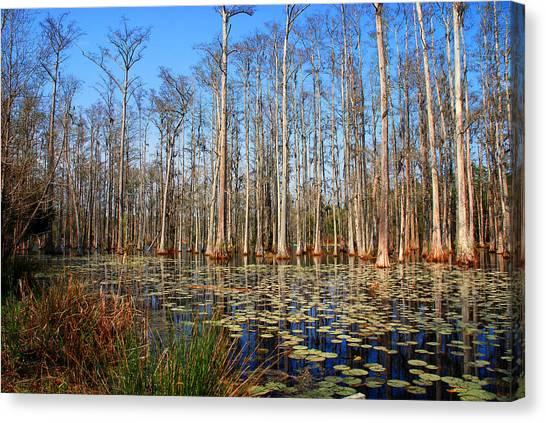 South Carolina Swamps Canvas Print