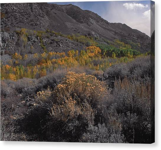 South Fork Valley Gold Canvas Print