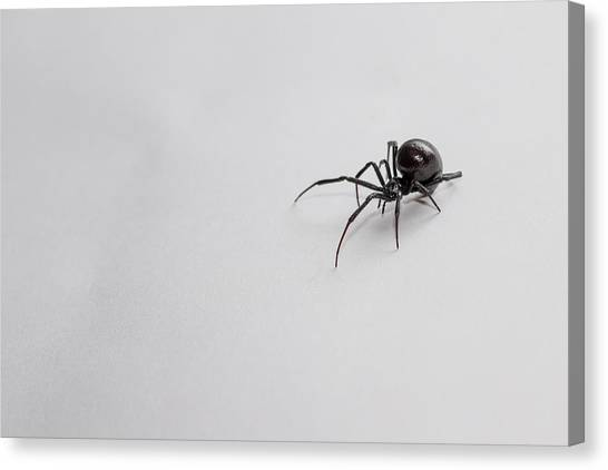 Black Widow Canvas Print - Southern Black Widow Spider by Amber Flowers