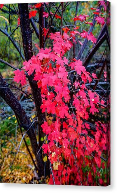 Shrub Canvas Print - Southern Fall by Chad Dutson