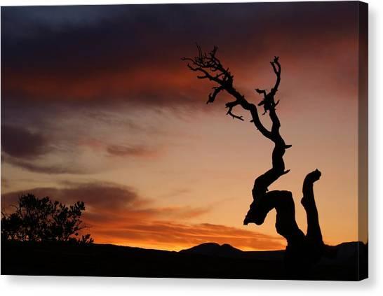 Southwest Tree Sunset Canvas Print