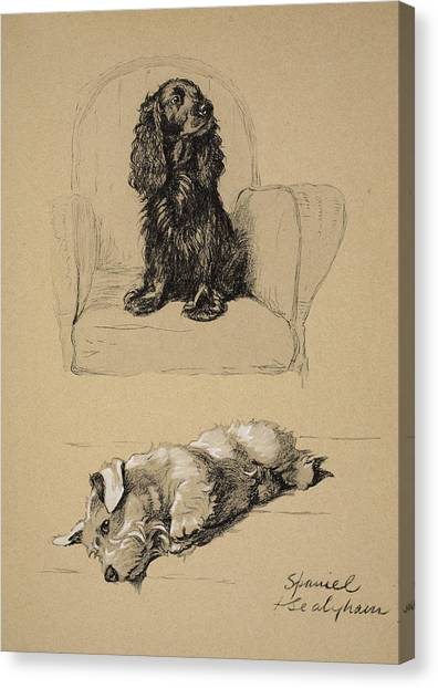 Cocker Spaniels Canvas Print - Spaniel And Sealyham, 1930 by Cecil Charles Windsor Aldin