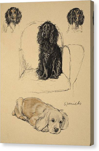 Cocker Spaniels Canvas Print - Spaniels, 1930, Illustrations by Cecil Charles Windsor Aldin