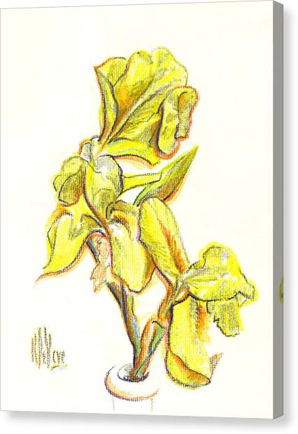 Spanish Irises Canvas Print
