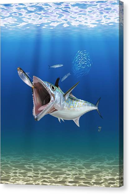 Spanish Mackerel Canvas Print