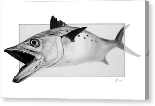 Spanish Mackerel - Pencil Canvas Print