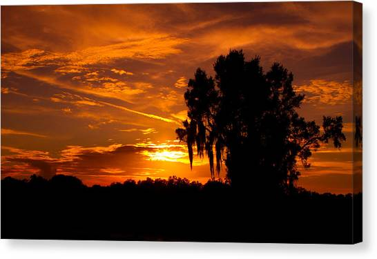 Canvas Print - Spanish Moss by Fizzy Image
