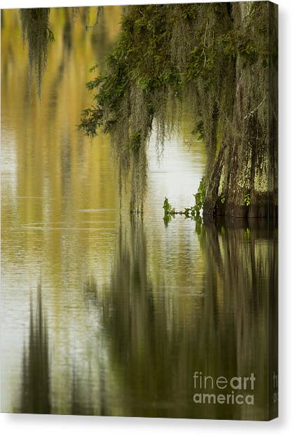 Spanish Moss Reflections Canvas Print by Kelly Morvant