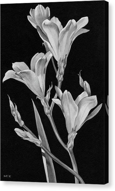 Sparaxis Flowers Canvas Print