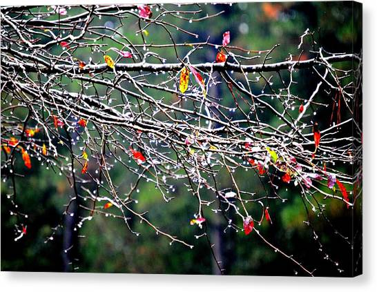 Sparkle Canvas Print by Beverly Hammond
