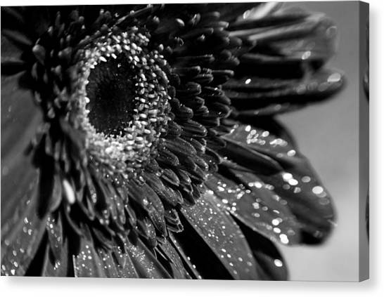Canvas Print featuring the photograph Sparkling Gerbera In Monochrome by Beverly Stapleton