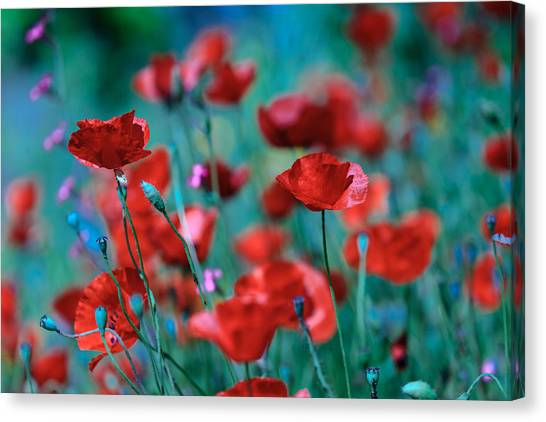Sparkling Red Canvas Print