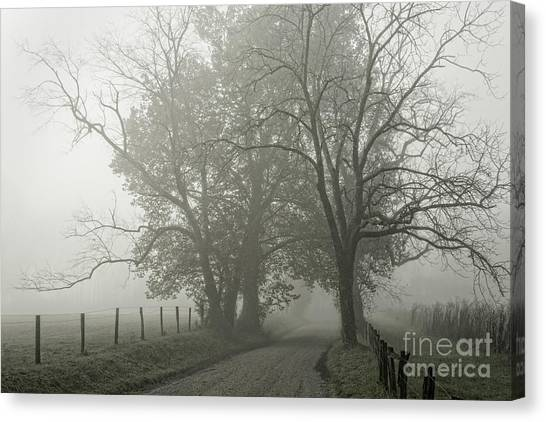 Sparks Lane Fog Canvas Print