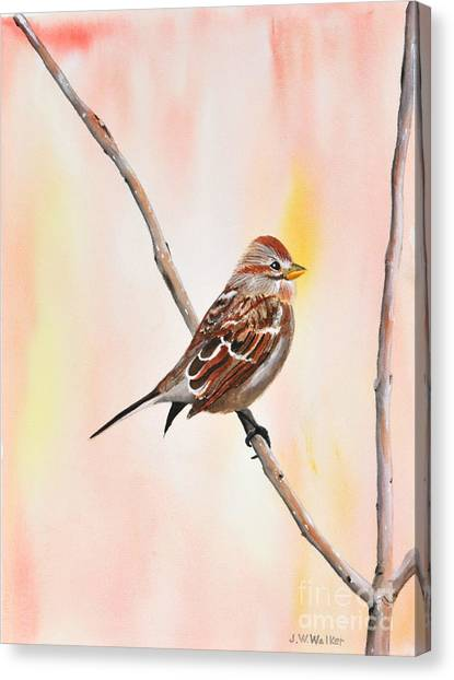 Sparrow I Canvas Print