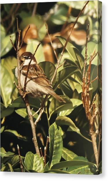 Sparrow On The Branch Canvas Print by Alberto Ponno