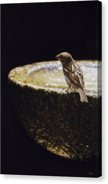 Sparrow With Fountain Canvas Print by Alberto Ponno