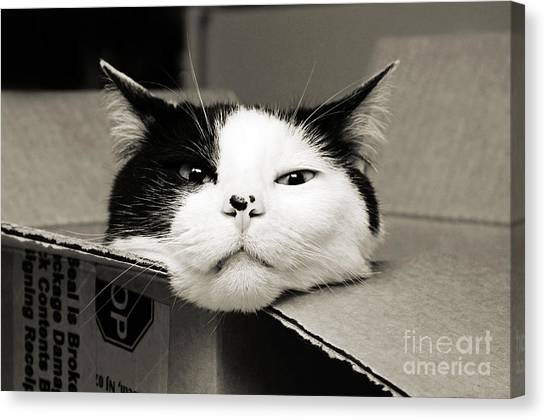 Special Delivery It's Pepper The Cat  Canvas Print