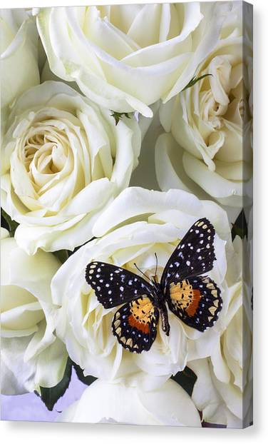 Floral Canvas Print - Speckled Butterfly On White Rose by Garry Gay