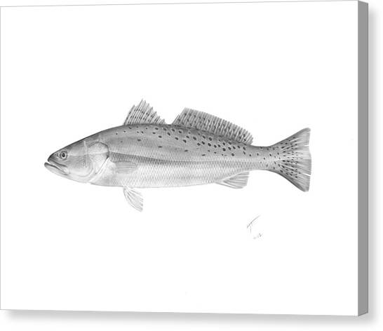 Speckled Trout - Scientific Canvas Print