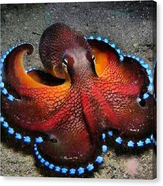 Octopus Canvas Print - Spectacularly Beautiful Lol I Would Be by Brandon Fisher