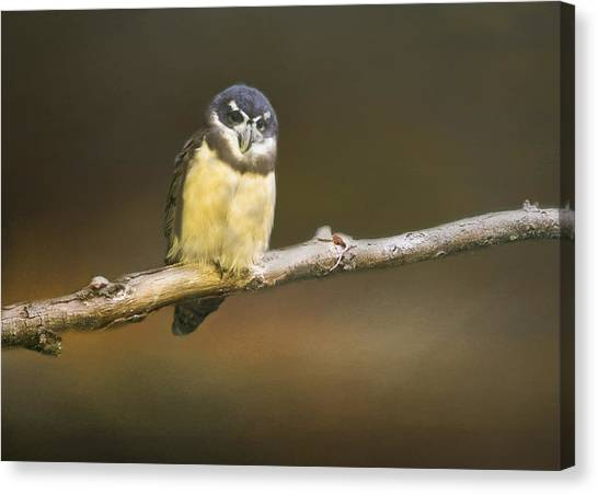 Spectacled Owl  Canvas Print