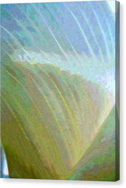 Spectrum Calla Lily  Canvas Print