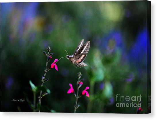 Sphinx Moth And Summer Flowers Canvas Print