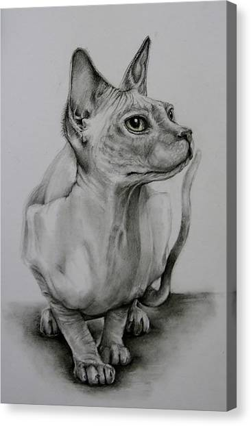 Sphynx Cats Canvas Print - Sphynx by Jean Cormier