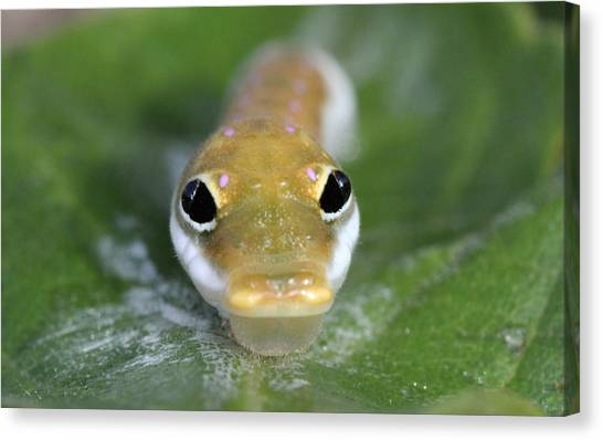 Caterpillers Canvas Print - Spicey by John Flannery