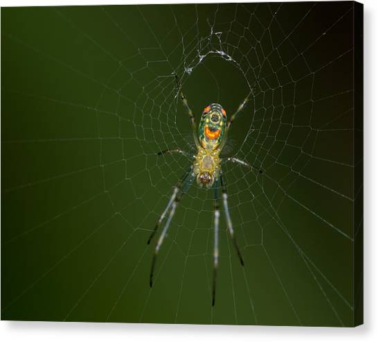 Spider In Mexico Canvas Print by Brian Magnier