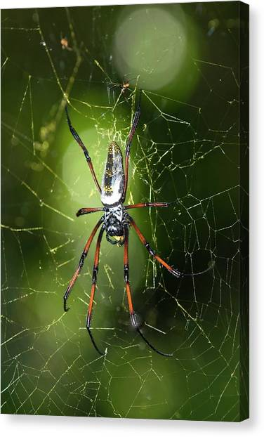 Spider Web Canvas Print - Spider by Philippe Psaila/science Photo Library